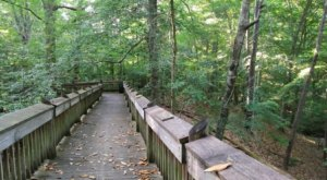 Tree Top Trail Is A Boardwalk Hike In Mississippi That Leads To A Secret Scenic View