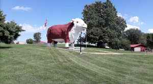 Travelers Are Often Dazed And Confused When They Drive By This Bizarre Bull In Iowa