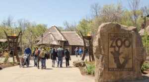 Take A Boozy Adults-Only Safari At The Nashville Zoo This Spring