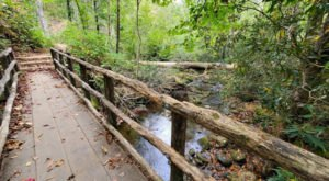 Take An Easy Loop Trail To Enter Another World At  Joyce Kilmer Memorial Forest In North Carolina