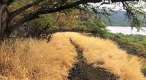 The 4-Mile Captain Cook Trail Leads Adventurers To A Unique Slice Of Hawaiian History