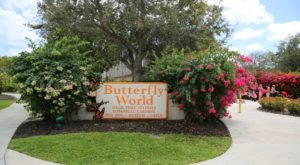 Butterfly World Of Florida Is Home To The State's Largest Butterfly House And Maze
