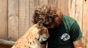 Take The Whole Family To Pet And Feed Exotic Cats At Animal Adventures In Massachusetts