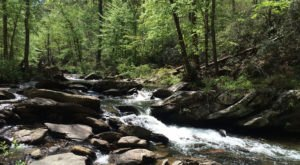 The Remote Trail Through The Cheaha Wilderness In Alabama Winds Through A Lush Forest And Along A Rushing Creek
