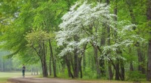 The Dogwood Trails Celebration In Texas Is Back For Its 82nd Year Of Fun & Festivities