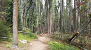 Take An Easy Out-And-Back Trail To Enter Another World At Ceran Saint Vrain In Colorado