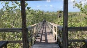 Be In Awe Of The Natural Beauty Found On This Short, Secluded Hike In Florida's Briggs Nature Center