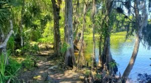 The Remote Hike On The St. Francis Trail In Florida Winds Through Floodplain Forests And Pine Flatwoods