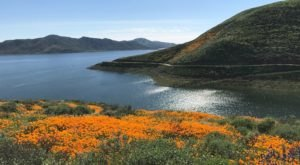 This Easy Wildflower Hike In Southern California Will Transport You Into A Sea Of Color