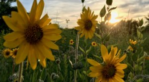 This Easy Wildflower Hike In Arkansas Will Transport You Into A Sea Of Color