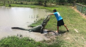 Get Up Close And Personal With Over 450 Alligators At Gator Country In Texas