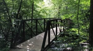 Take An Easy Loop Trail To Enter Another World At Limberlost Trail In Virginia