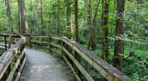 Congaree National Park Offers A Boardwalk Hike In South Carolina That Leads To Secret Views