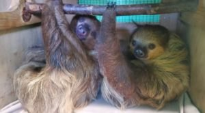 Play With Sloths At North Georgia Zoo For An Adorable Adventure