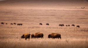 The Epic Drive Through Tallgrass Prairie Preserve Is Perfect For A Day Trip Outing In Oklahoma