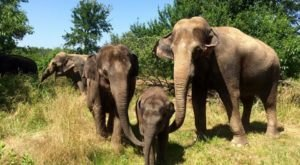 Spend The Day With Elephants At The Endangered Ark Foundation In Oklahoma