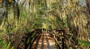 The Bayou Coquille Trail Near New Orleans Will Take You To A Beautiful Emerald Lagoon