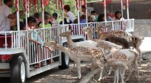 Pet Animals While Riding An Open-Air Train At Wonder World Park In Texas
