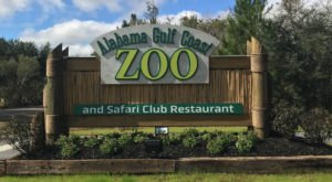 Play With Lemurs At Alabama Gulf Coast Zoo For An Adorable Adventure