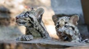 Enjoy A Kid-Friendly Virtual Zoo School From Texas' Houston Zoo