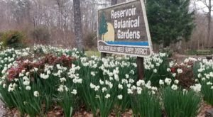 You're Guaranteed To Love Reservoir Botanical Gardens, A Secret Garden In Mississippi