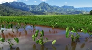8 Agricultural Industries That Have Shaped The Hawaiian Islands