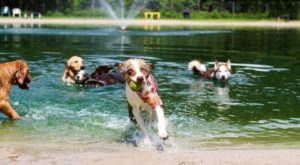 The 42-Acre Dog Park In Florida, Dogwood Park, Is Also A Hiker's Paradise