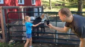 Pauley Alpaca Company Farm In Minnesota Makes For A Fun Family Day Trip