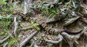 Watch Your Step, More Rattlesnakes And Copperheads Are Emerging From Their Dens Around New York