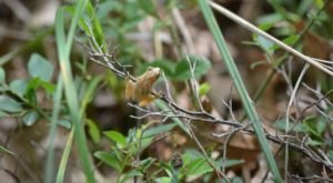 Thousands Of Singing Spring Peepers Are A Welcome Sound Of Normalcy Here In Michigan