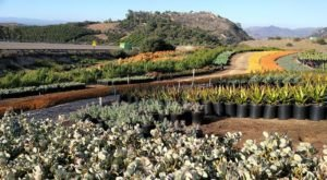 Walk Through A Sea Of Succulents At Southern California's Waterwise Botanicals
