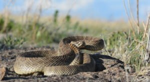 8 Creepy Critters You Might Encounter When You're Out And About In Iowa