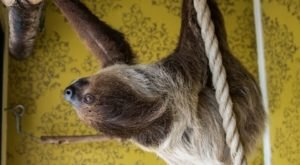 Mississippi's Hattiesburg Zoo Has A Sloth Cam…And It's As Great As You'd Expect