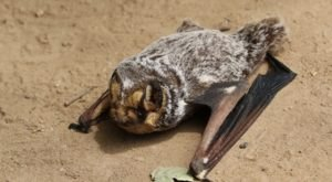 Thousands Of Bats Will Be Invading Colorado Once Again This Spring