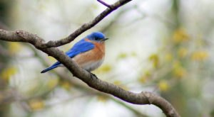 This Spring Is The Perfect Time To Listen For These Backyard Birdsongs Common In West Virginia