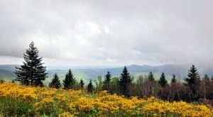 The Highland Scenic Highway Is A Back Road You Didn't Know Existed But Is Perfect For A Scenic Drive In West Virginia