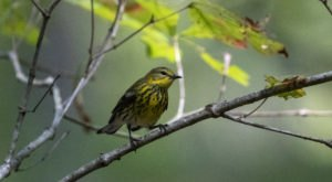 Thousands Of Adorable Songbirds Will Be Making Their Way Through Virginia This Spring