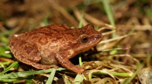 Thousands Of Singing Spring Peepers Are A Welcome Sound Of Normalcy Here In Kentucky