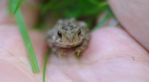 Thousands Of Singing Spring Peepers Are A Welcome Sound Of Normalcy Here In Delaware