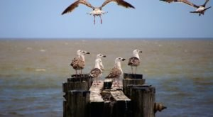 Enjoy A Beautiful Stroll Near Port Mahon On The Delaware Bay
