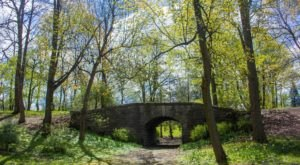 Unwind With A Stroll Through Buffalo's Scenic Rumsey Woods In Delaware Park