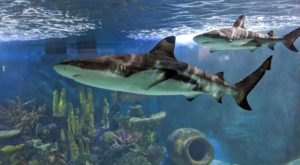 The Aquarium Of Niagara Near Buffalo Is Offering Free Livestreams Of Sharks, Penguins, Sea Lions, And More