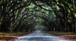 The Most-Photographed Oak-Lined Road In The Country Is Right Here On The Georgia Coast