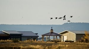 The Super Remote Modoc Wildlife Refuge In Northern California Is Home To An Abundance Of Waterfowl