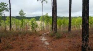 Explore 10 Miles Of Forest Hills On The Caroline Dormon Trail In Louisiana