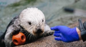 The Oregon Coast Aquarium Is Offering Free Livestreams Of Sharks, Otters, And More