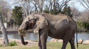 Go On A Virtual Zoo Visit And Watch Livestreams Of Animals With Kansas' Sedgwick County Zoo