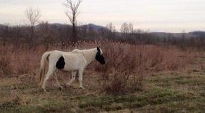 This Inspiring Non-Profit Saves Abandoned Horses That Roam West Virginia's Remote Coalfields