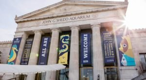 The Shedd Aquarium In Illinois Is Offering Free Livestreams Of Angelfish, Yellow Tangs, And More