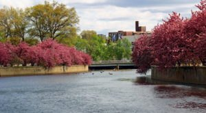 Connecticut's Enchanting Cherry Blossom Trees Are A Welcome Sign Of Spring